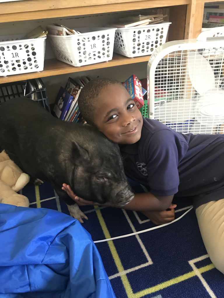 Willow the pig